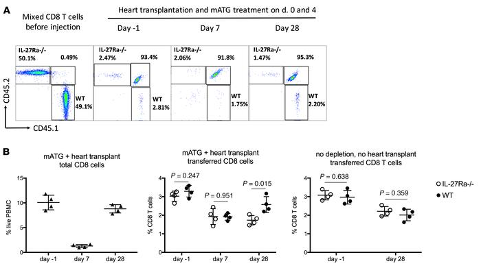 IL-27R expression is required for optimal CD8+ T cell reconstitution. Sp...