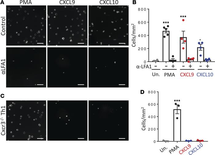 CXCL9 and CXCL10 induce LFA-1–dependent T cell adhesion to ICAM-1 throug...