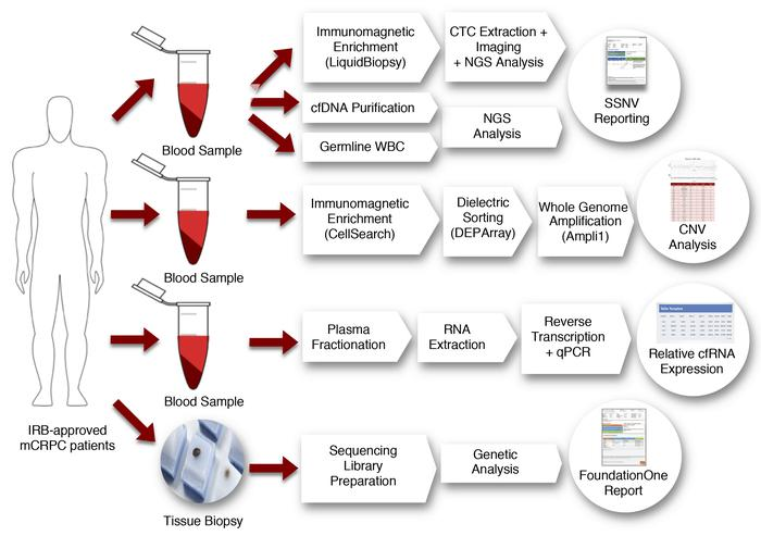 Multiparametric workflow. Three blood samples were collected and analyze...