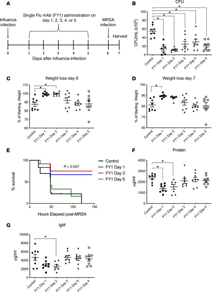 Influenza HA targeting mAb FY1 decreases acute lung injury and protects ...