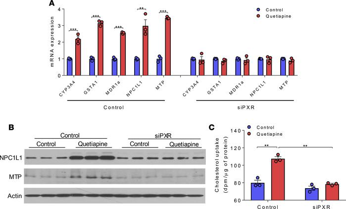 Quetiapine-mediated PXR activation increases NPC1L1 and MTP expression a...