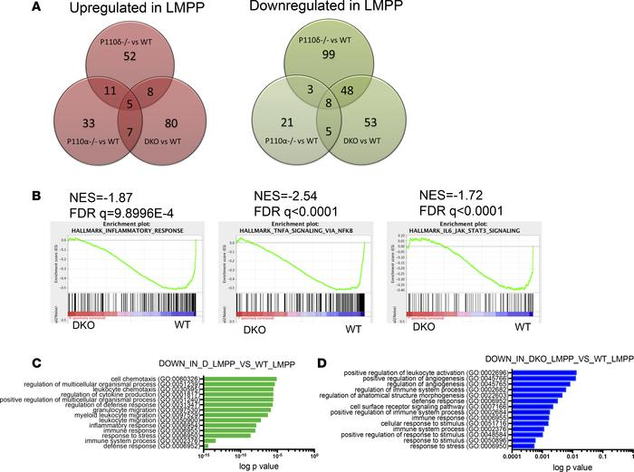Downregulation of inflammatory signaling gene sets in DKO LMPPs. (A) Ven...