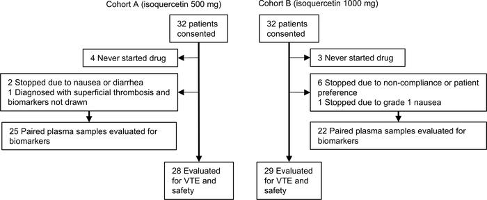 Flow diagram of patients according to isoquercetin treatment allocation.