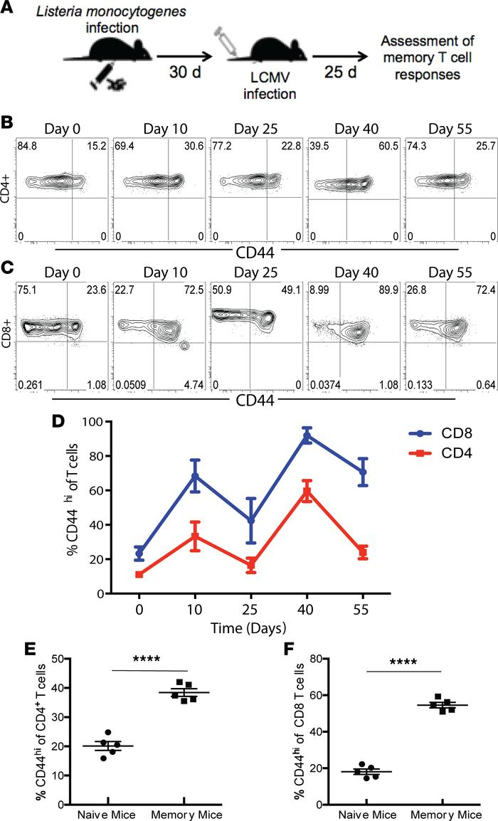 Generation and characterization of polyclonal memory T cells following i...