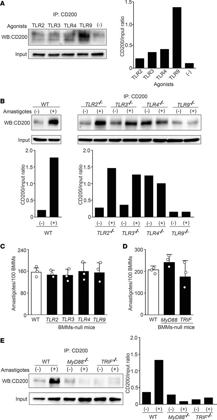 Leishmania amazonensis–induced CD200 expression requires TLR9, MyD88, a...