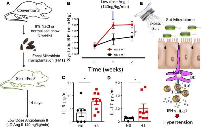 JCI Insight - High dietary salt–induced DC activation