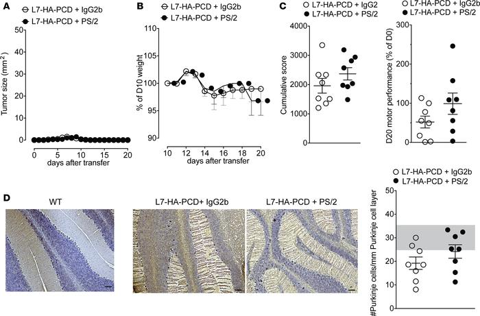Treatment with an anti–α4 integrin mAb shows no efficacy in the PCD mode...