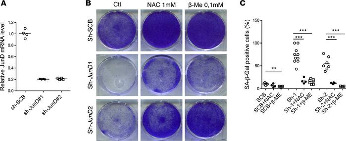 Inactivation of JunD leads to cell senescence: effects of antioxidant tr...