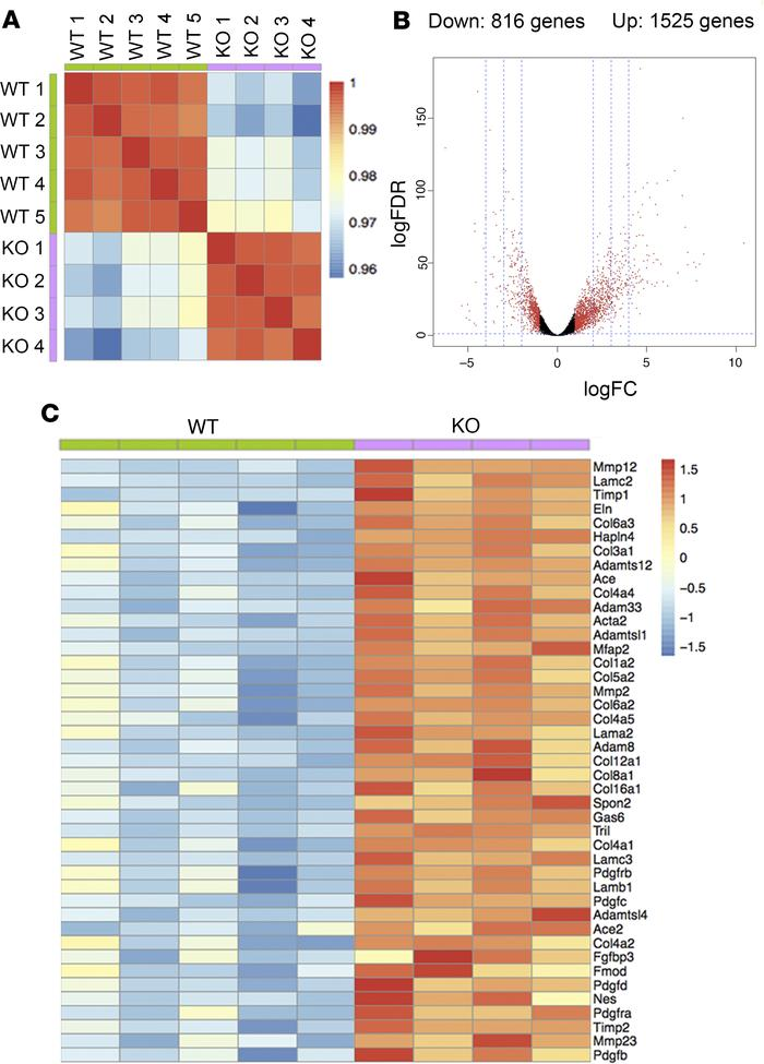 RNA-sequencing analysis reveals global transcriptional changes in OGT-LK...
