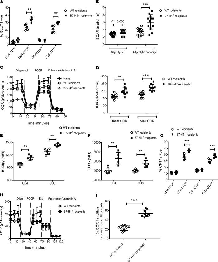 Metabolic alterations of donor T cells in WT versus B7-H4–/– recipients....