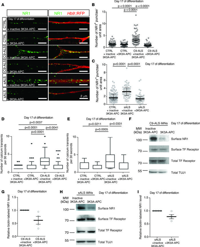 C9ORF72 and sporadic ALS iMNs have elevated glutamate receptor levels t...