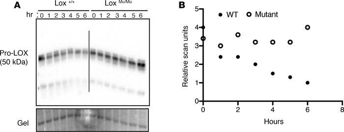 M292R Lox mutation leads to altered protein conformation. (A) Cell lysat...