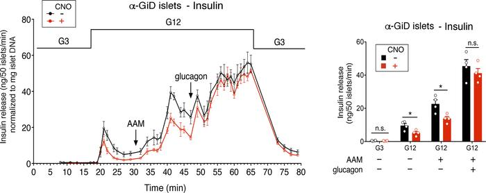 Glucagon restores normal insulin release in CNO-treated α-GiD islets. Is...