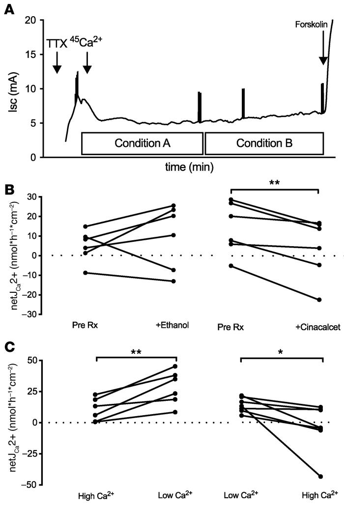 The effect of altering extracellular Ca2+ on Ca2+ fluxes across mouse pr...