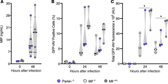 MIF levels independent of parkin during IAV infection in alveolar epithe...
