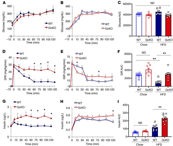 Hyperglycemic clamp studies in chow- and HFD-fed WT and Gc-KO mice asses...