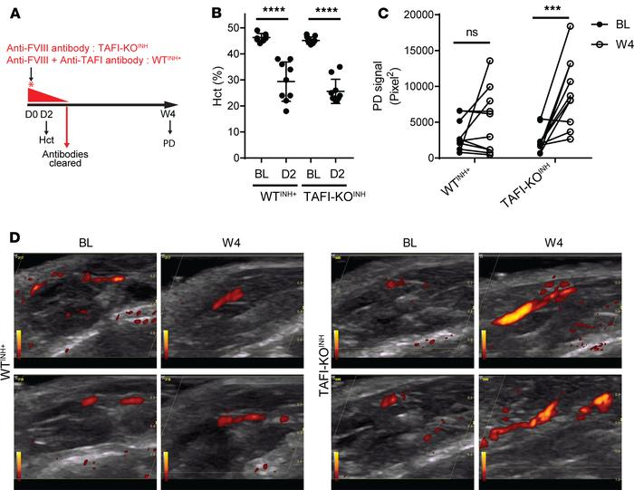 TAFI deficiency in mice increases joint blood flow after bleeding. (A) S...