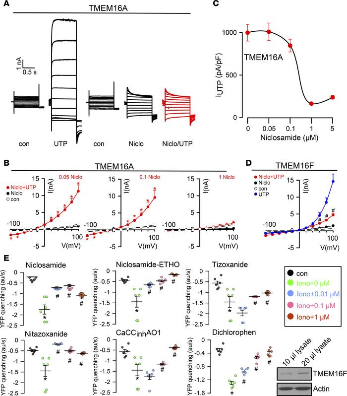Inhibition of TMEM16A and TMEM16F by niclosamide. (A) TMEM16A whole-cell...