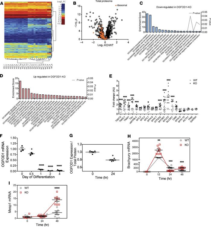 Quantitative analyses of proteomic profiles and differentiation status o...