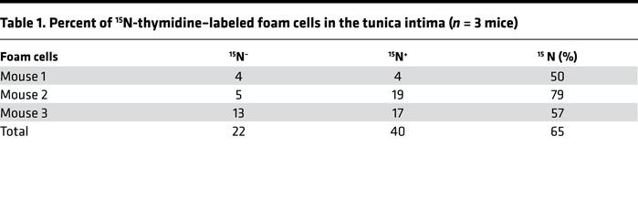 Percent of 15N-thymidine–labeled foam cells in the tunica intima (n = 3 ...