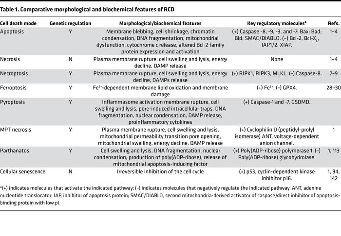 Comparative morphological and biochemical features of RCD