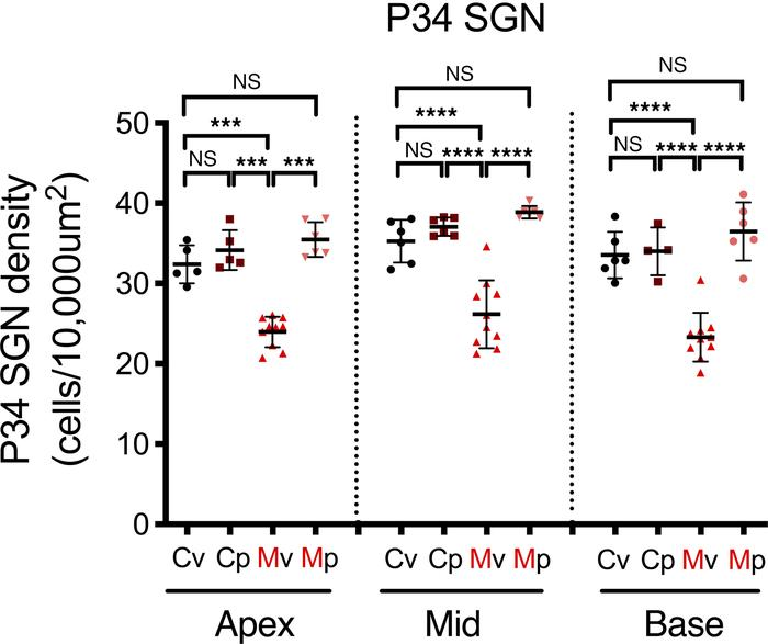 Treatment with methylprednisolone limits SGN loss in MCMV-infected mice....
