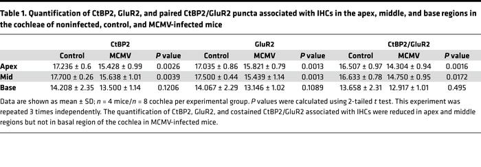 Quantification of CtBP2, GluR2, and paired CtBP2/GluR2 puncta associated...