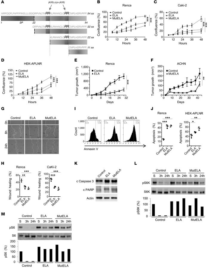 Repression of the malignant phenotype and increased activation of mTORC1...