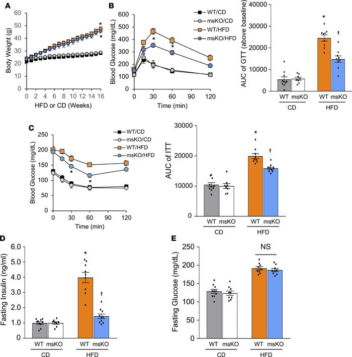 Loss of MondoA improves HFD-induced glucose tolerance and insulin resist...