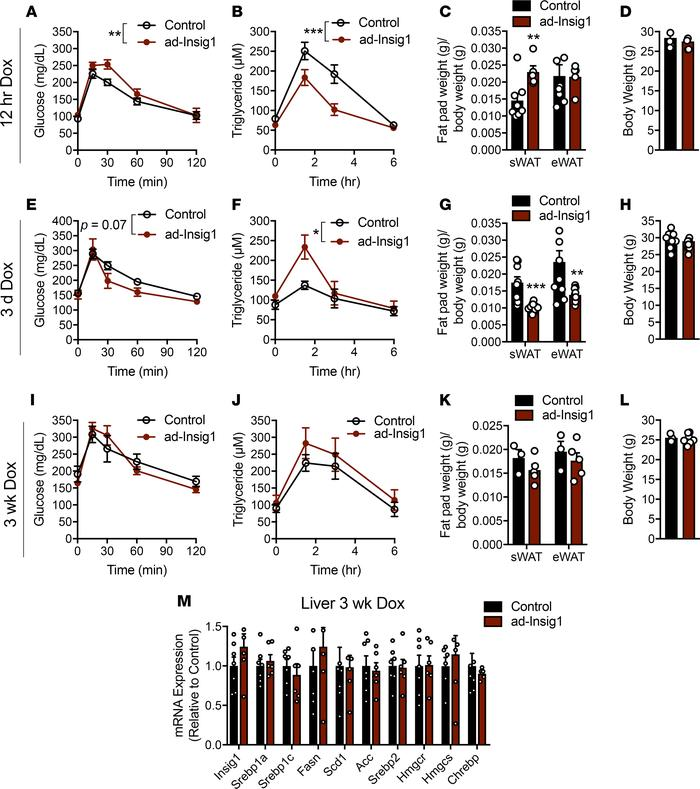 Manipulation of adipose DNL alters whole-body metabolism. (A–D) Twelve h...