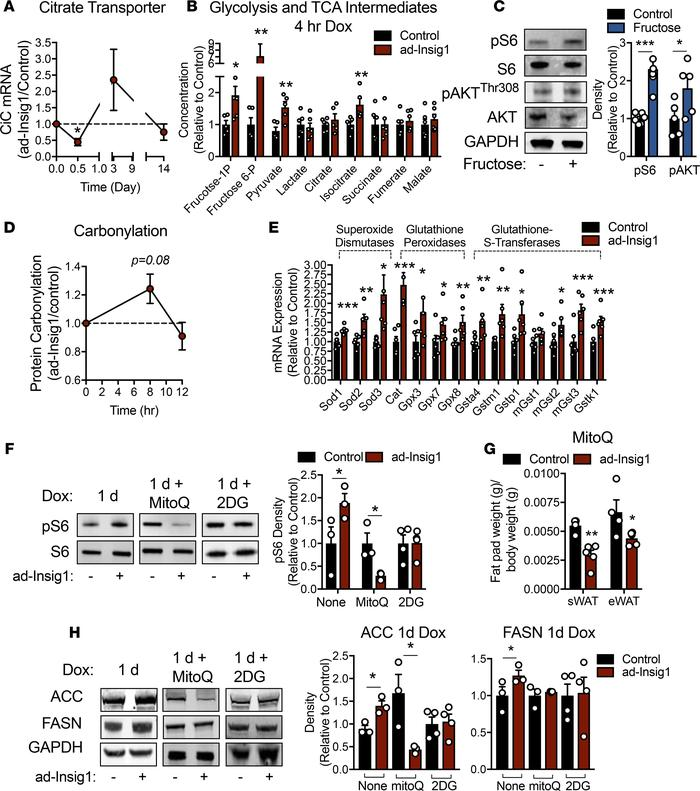 Acute suppression of AT DNL induces mitochondrial oxidative stress, resu...