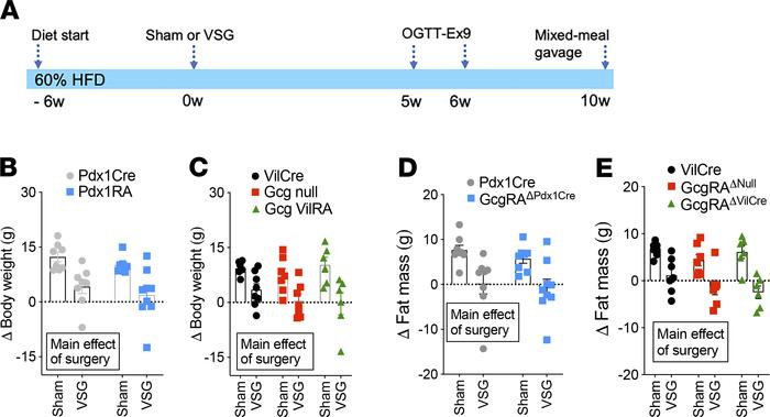 Gcg is not necessary in the impact of VSG on BW loss. (A) A schematic of...