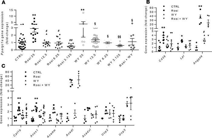 PPARα interferes with PPARγ-mediated induction of tesaglitazar on Ppargc...