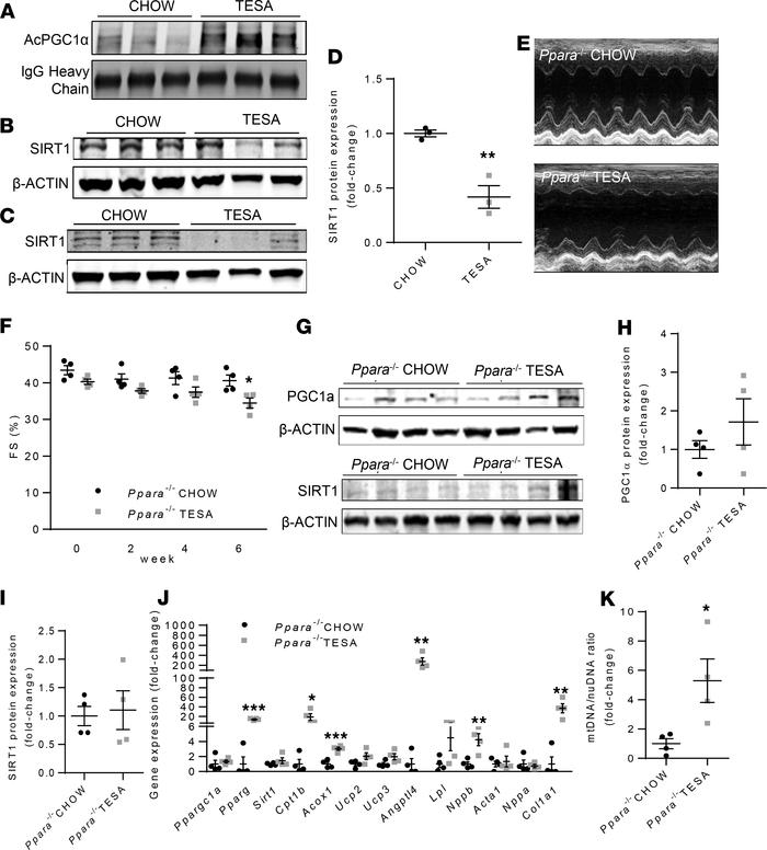 Tesaglitazar suppresses SIRT1 expression and promotes acetylation of PGC...