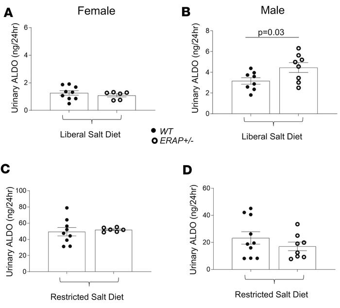 Urinary ALDO levels in female and male ERAP1+/– and WT mice after 1 week...