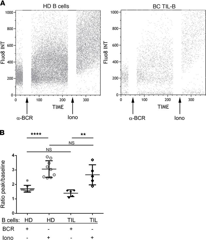 BCR-mediated activation in tumor-infiltrating B cells. (A and B) TIL-B w...