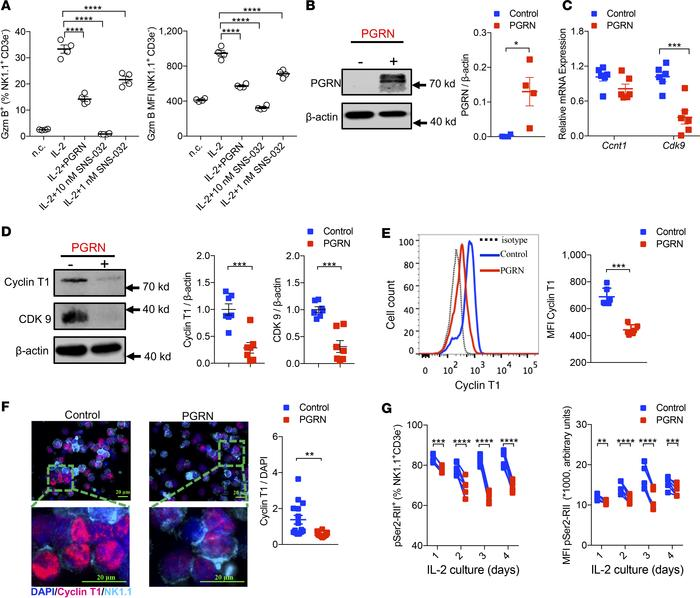 PGRN decreases cyclin T1 and CDK9 expression in NK cells. (A) Splenocyte...