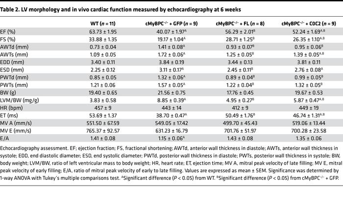 LV morphology and in vivo cardiac function measured by echocardiography ...