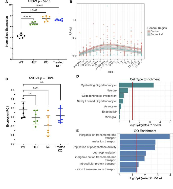 Microarray expression studies of the brain in arginase deficiency reveal...