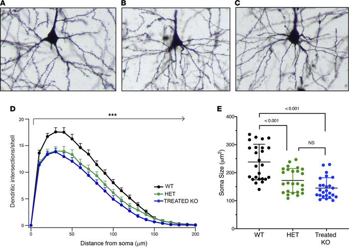 Analysis of the layer V pyramidal tract neurons demonstrate differences ...