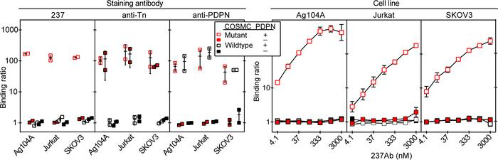 237Ab only binds to COSMC-mutant cell lines expressing murine PDPN. The ...