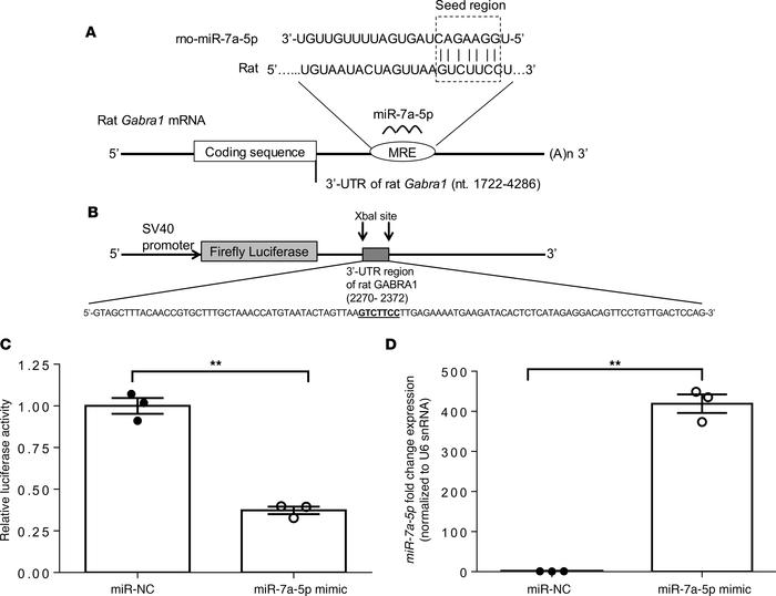 Restoration of the microRNA-7a-5p negatively regulates the expression of...