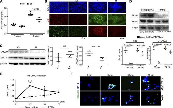 PP2A expression in B cells for disease development in mice after injecti...