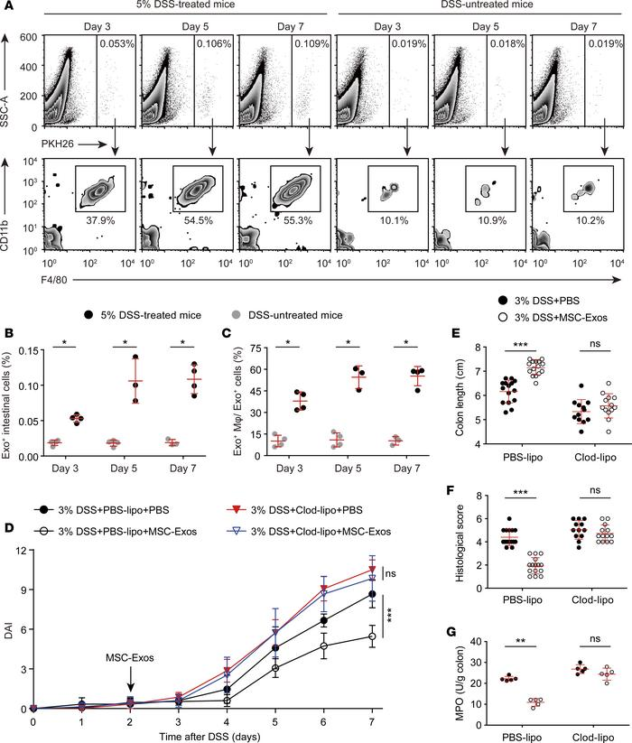 The anticolitic benefit of MSC-Exos in DSS-colitic mice is macrophage de...