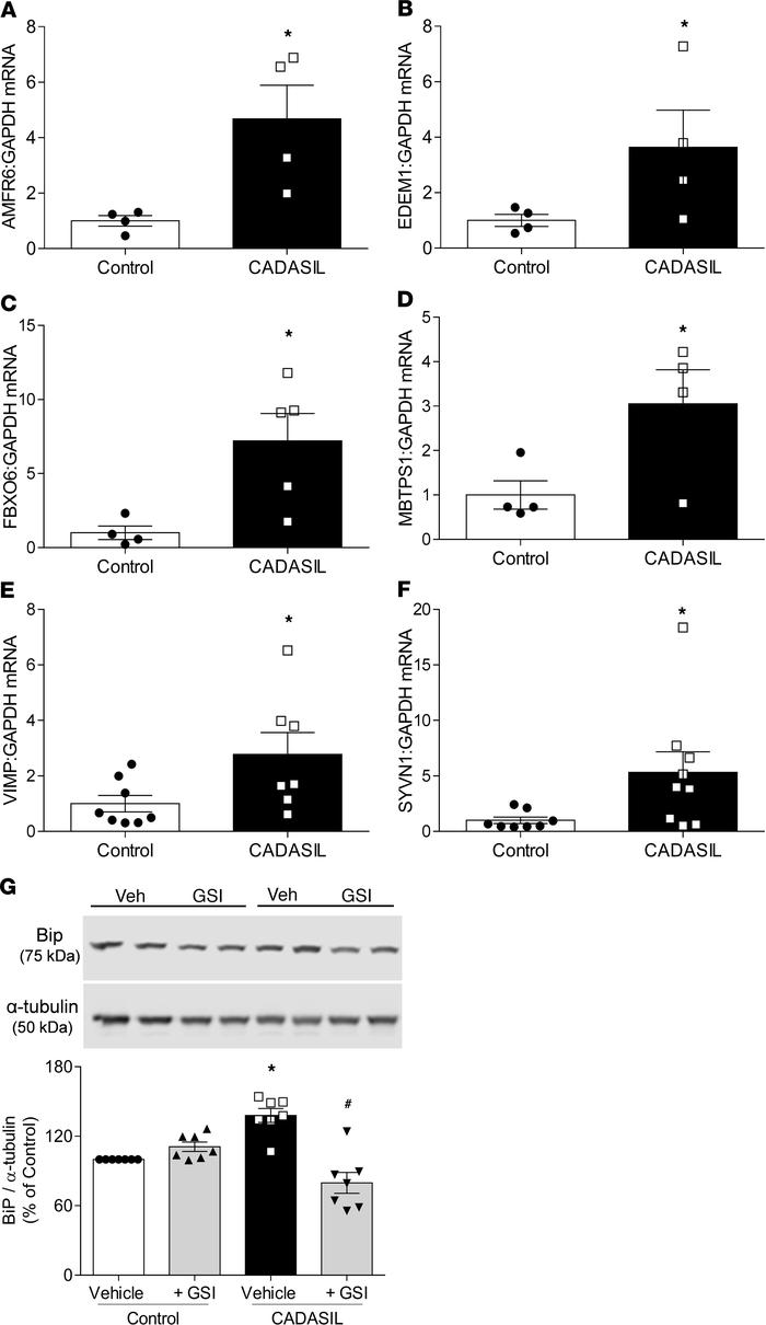 Increased ER and oxidative stress in CADASIL VSMCs. ER stress–related ge...