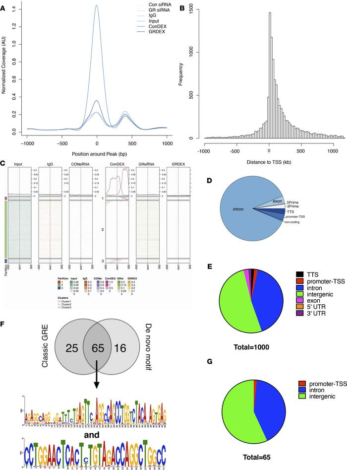 ChIP-seq results. (A) Six conditions were submitted for ChIP-seq analysi...
