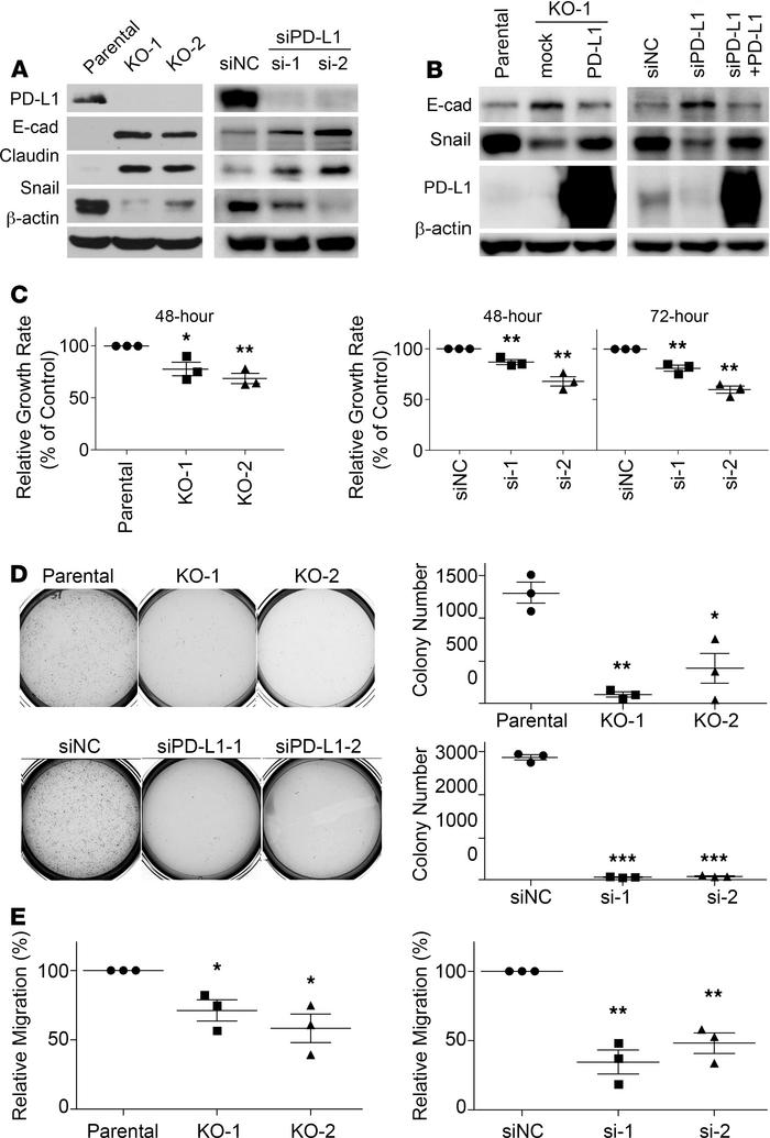 Expression of PD-L1 promotes the EMT and aggressive behaviors in MDA-MB-...
