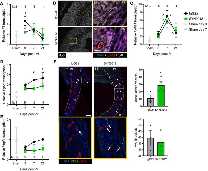 CDH11 blockade reduces inflammatory signaling and improves vascular matu...