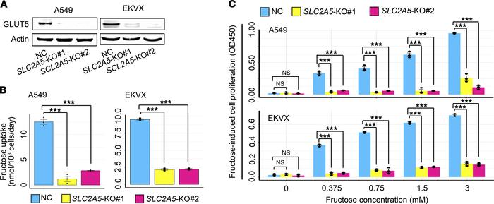 Abrogation of SLC2A5 impairs fructose uptake and fructose-induced cell p...