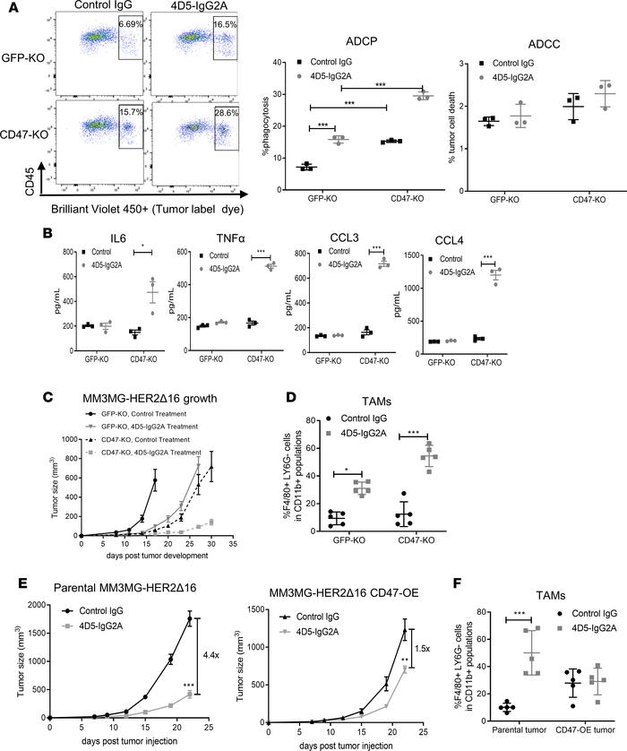 CD47 suppresses the antitumor activity of mouse trastuzumab (4D5). (A) C...